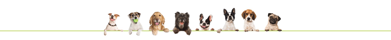 barra de perros
