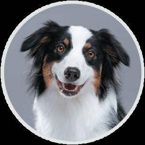 perro-circulo